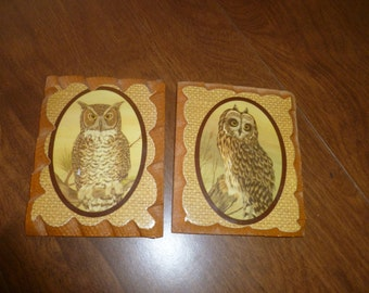 Two Pretty Owls