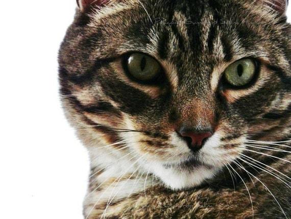 Beautiful Colorful Cat photo - 8 x 10 frame Print Art Photography