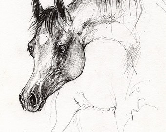 Bay arabian foal original pen drawing
