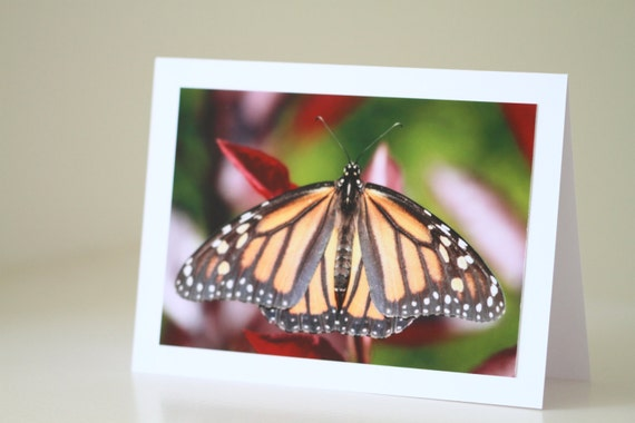 Butterfly Photo Card for Nature Lovers, Frameable Photography for Birthday