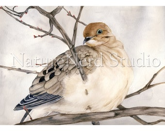 "Dove, Mourning in a Cherry Tree, Watercolor, 8"" x 10"" Fine Art Print"