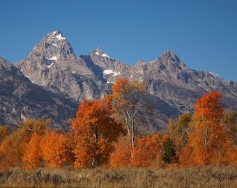 Tetons Jackson Hole Wyoming fall landscape orange trees scenic photography 8x10