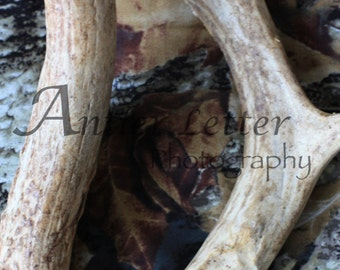 SALE-Letter D, Antler, Whitetail Buck Shed, Photography, Alphabet, Hunting