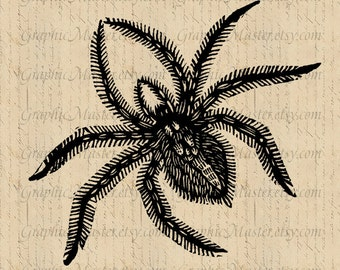 Halloween PNG & JPEG Black Spider Instant Download Digital Collage Sheet Image Iron On Transfer Fabric Burlap Pillows Towels Tote Bags a253