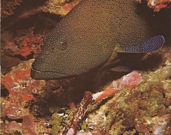 4 Vintage fish poster