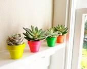 Neon mini planters, Succulent pots, cactus planters