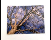 Tree Photograph Postcard