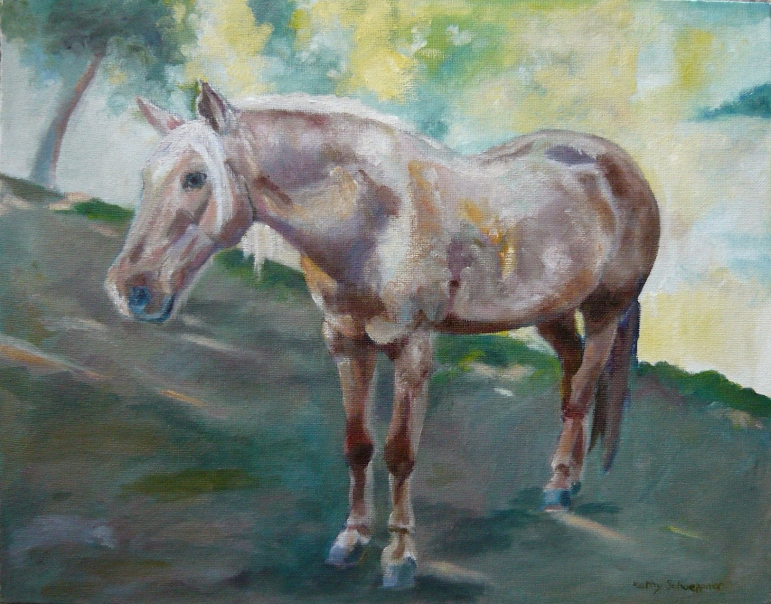 Furry White Horse Oil On Canvas Board 11 X 14