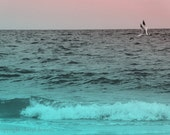 Flight/Fine Art Photography Print/Aqua//Summer/Pink/Gray/Teal/Summer/Blue/Beach/Ocean/Photography/5x7 - PointofViewCreations