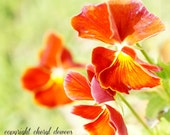 Sunny Blooms/Fine Art Photo Print/Photography/Flowers/Red/Orange/Green/Yellow/Nature/Macro - PointofViewCreations