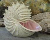Items similar to beach decor gift nautilus sea shell for Nautilus garden designs