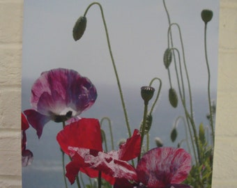 nature photography poppies on canvas