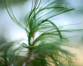 Photograph Pine Branches 8x10 Print, Soft Focus Tree Photo, Autumn Scene Photograph, Holiday Decor, Macro Pine Photograph, Through the Pines