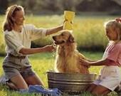 Refresh & Repel Essential Shampoo for Dogs w/ Natural Neem 8 ounces