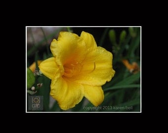 Yellow Lily, Flower Photography Print, 8x10 matted to 11x14, or 5x7 matted to 8x10, Home Décor, Wall Art