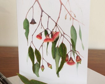 "Fine Art Card - ""Eucalyptus Caesia"" Silver Princess Gum taken from  original botanical water-colour painting"