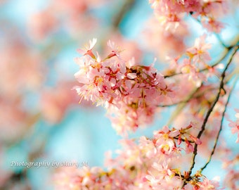 Floral Photography, Flower Photo,Floral Print, Soft ,Dreamy, Romantic ,Cherry Blossoms ,Flower with a touch of pink and sky blue,  HomeDecor