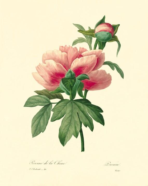 Vintage Floral Art Prints Www Pixshark Com Images