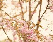 Shabby Chic Fine Art Photograph, Cherry Blossom Photo, Pale Pink, Washington DC, Spring, Flower Art, Cottage Art, Home Decor, 8x12 Print