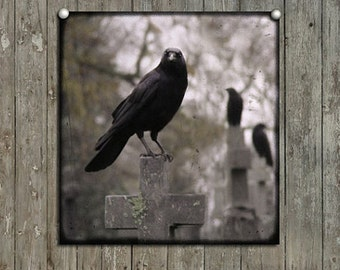 Ravens, Corvid, Necropolis Photograph, Gothic Bird, Blackbirds, Graveyard Crosses - Gather Ye Crows