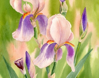 Colors of Spring 3 giclee with iris in shades of peach and purple