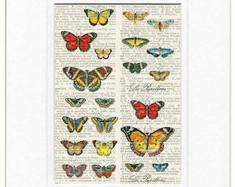 butterflies IV print