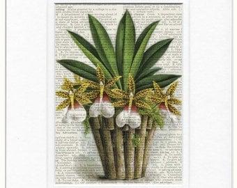 1800's orchid artwork print