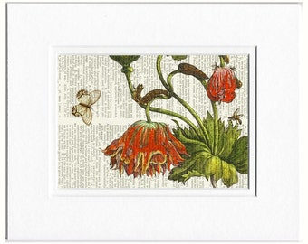 1600's botanical no.14 print