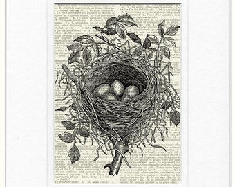 birds nest I dictionary page print