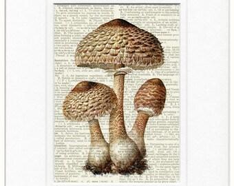 18oo's parasol mushroom dictionary page print