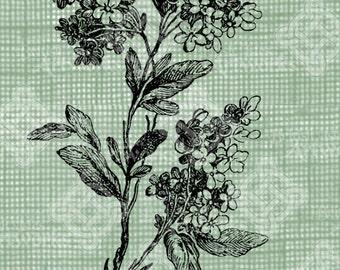 Digital Download Vintage Lilacs Branch, digi stamp, digis, digital stamp, Floral Branch with foliage and flowers, Antique Illustration