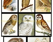 FIVE digital collage sheets, BIG SAVINGS! Instant Download, Vintage Owls 1-5,  40 images