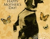 Boston Terrier Mothers Day Greeting Card 5 x 7 inches
