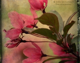 flowers blossoms petals pink nature photography floral photography home decor office decor