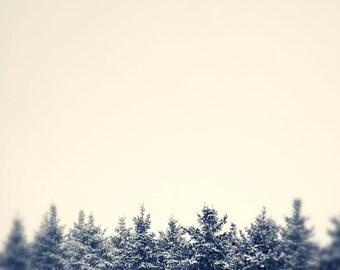 Nature photography, monochrome print, wall decor, sepia print, wall art, Pine trees, Neutral, minimalist, black and white, winter print