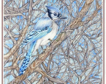 "Art Print ""Blue Jay"" print from original watercolor drawing, nature art, birds, trees, blue. FREE SHIPPING."