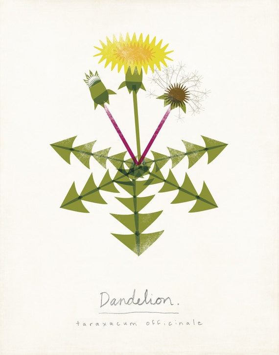 Dandelion Limited Edition Botanical Print