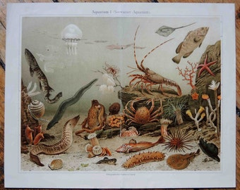 1894 UNDER WATER life LITHOGRAPH original antique ocean underwater color sealife lithograph print