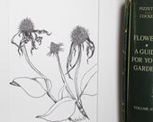 Black and white ink drawing of echinacea seedheads / nature art / botanical drawing