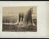 Very Rare OOAK Cabinet Card Photo of a Beautiful and Unusual Horse