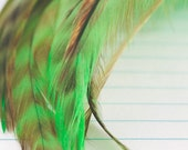 Craft Tail Feathers - Tiger Lime Green / Black / Brown (12 - 15.5cm) x 10