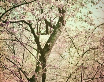 Cherry Blossoms Photograph Japanese Cherry Blossom Tree Wall Art Vintage Blooms in pale pink and aqua blue8x12