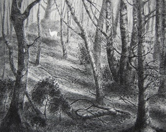 The white hart, etching by Flora McLachlan, sunlight in the woods, deer, holly, trees, shadows, forest, wood anemone
