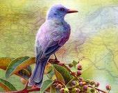 Bird Art Print - Bird Prints - Limited Edition Print - Giclee Print - Bird Print - Bird Poster - Bird Painting - Bird Wall Art - Birds