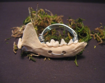Jaw Bone ring , wire wrapped bone jewelry, Vertebrae, Wire Wrapped Ring, Real Animal Jaw Bone