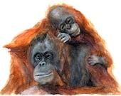 Mother Orangutan & Baby 11x8 Print of Original Watercolor