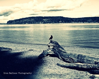BEACH DRIFTWOOD BIRD Photo Art