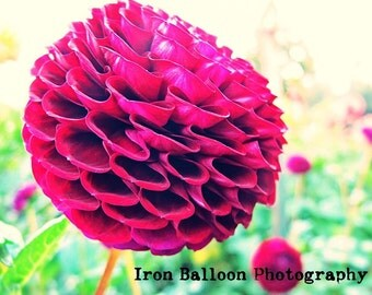 PINK DAHLIA FLOWER Gorgeous Art Print