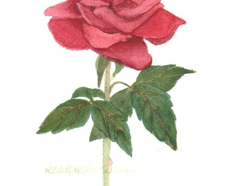 Red Rose 5 x 7  Original Watercolor