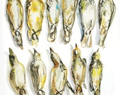 Bird Specimens in Rows - Glicee Print Watercolor Painting - ON HOLD FOR jestaburns1991